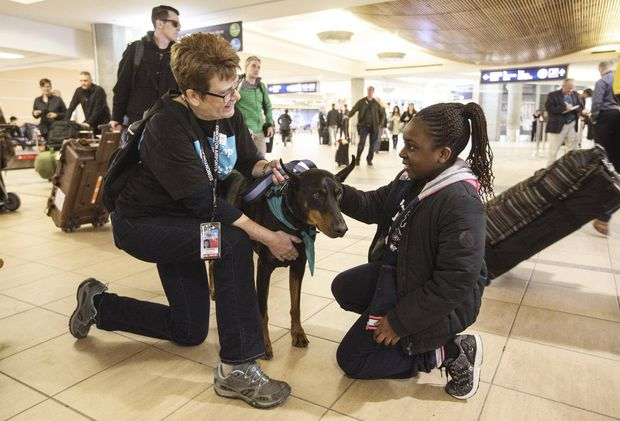 pet therapy takes off at canadian airports - the globe and mail