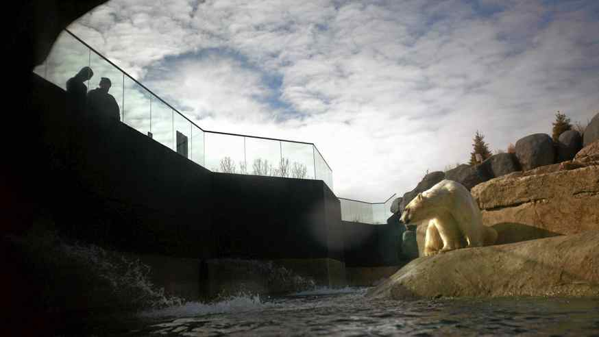 A polar bear is watched by two visitors at at the Tundra Trek section of the Metro Toronto Zoo.