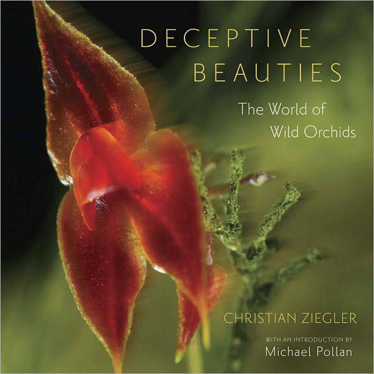 """DECEPTIVE BEAUTIES The World of Wild Orchids By Christian Ziegler (University of Chicago, 180 pages, $45) Its apparent fragility – and stunning beauty – belies the cut-throat survival stratagems of this street-fighting flower. The orchid, in its march from the top of the rain-forest canopy to Arctic circle austerity, has yet to find a habitat it can't tackle. Tiny seeds pair with ground fungi to provide nutrients for young flowers to sprout broad petals that serve as """"landing strips"""" for pollinating insects."""