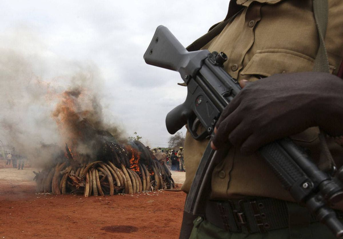 A warden stands guard as an illegal consignment of five tonnes of ivory confiscated from smugglers in Singapore in 2002 is destroyed during the African Elephant Law Enforcement Day in Tsavo West National Park, 380 km east of Nairobi, Kenya.
