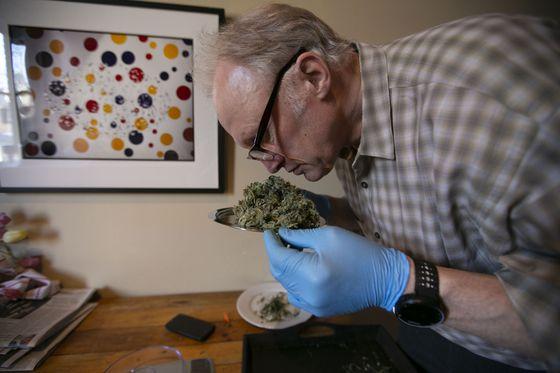Canada's saddest grow-op: My humiliating adventures in growing marijuana