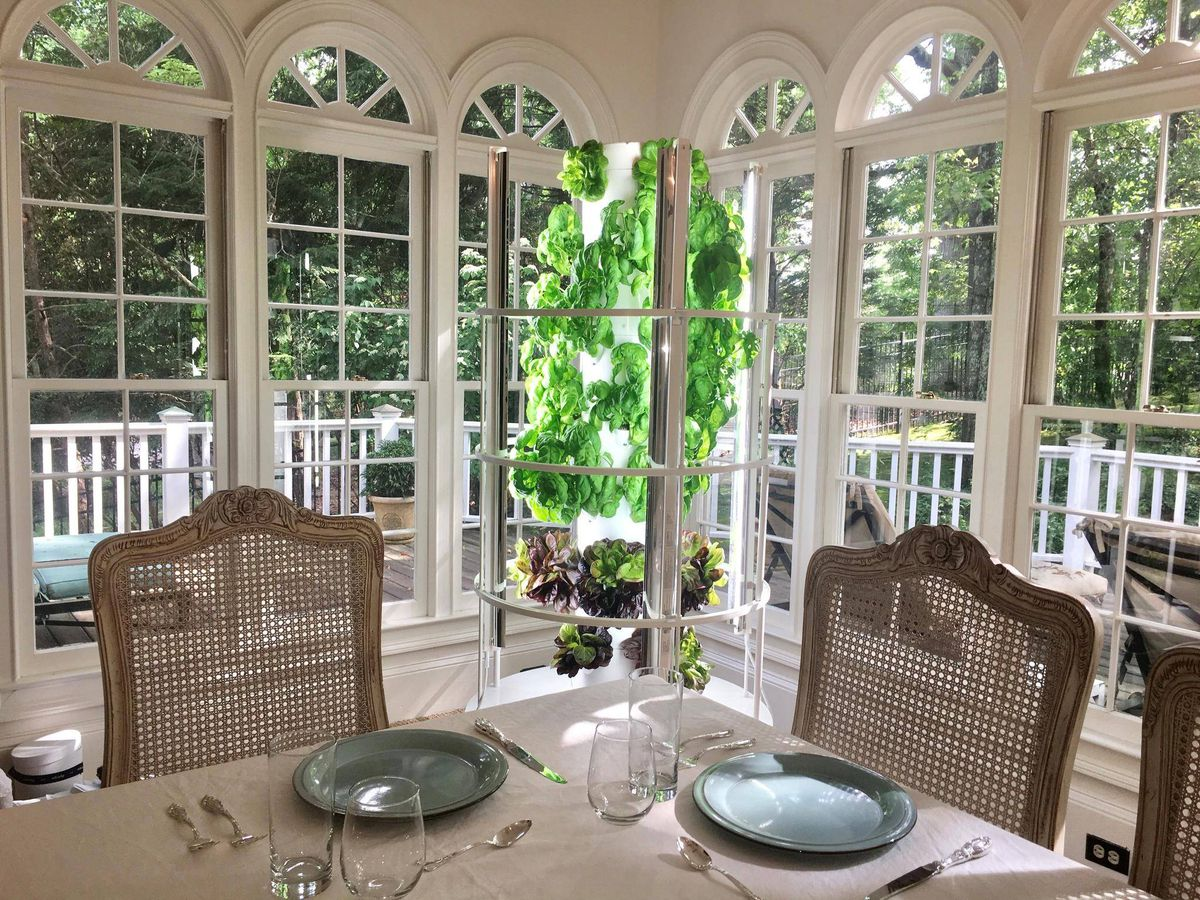 Indoor vegetable gardens prove to be a growing trend the for Indoor gardening trends