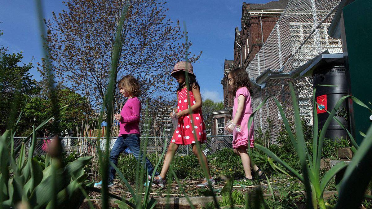 Winchester Public School kindergarteners Emma Syme, 5, Nisha Kulkarni, 5, and Lily Stewart-Ward, 6 look through the school's garden.