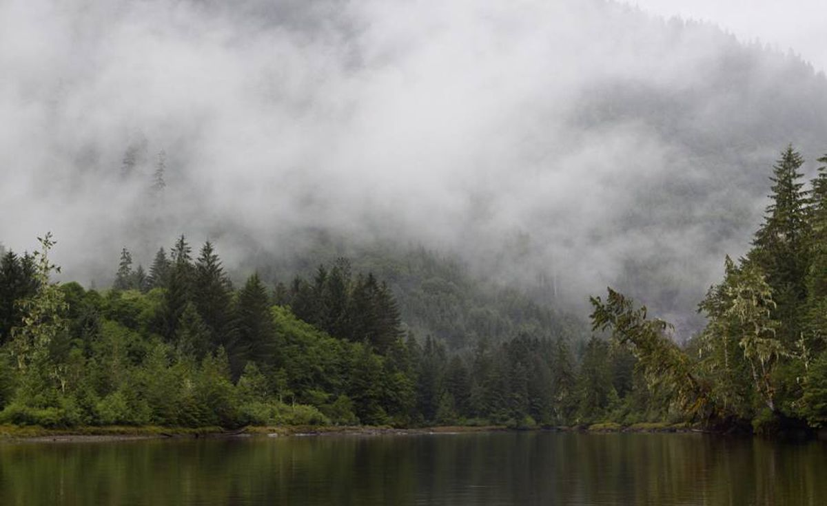 Mist hangs low in the valleys along the steep fjords of the Great Bear Rain Forest.