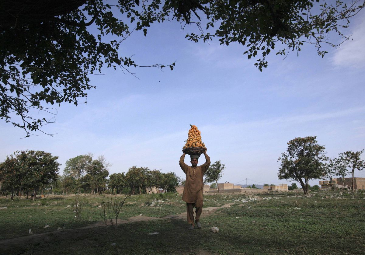 A man carries a basket of fruits on the outskirts of Abbottabad.