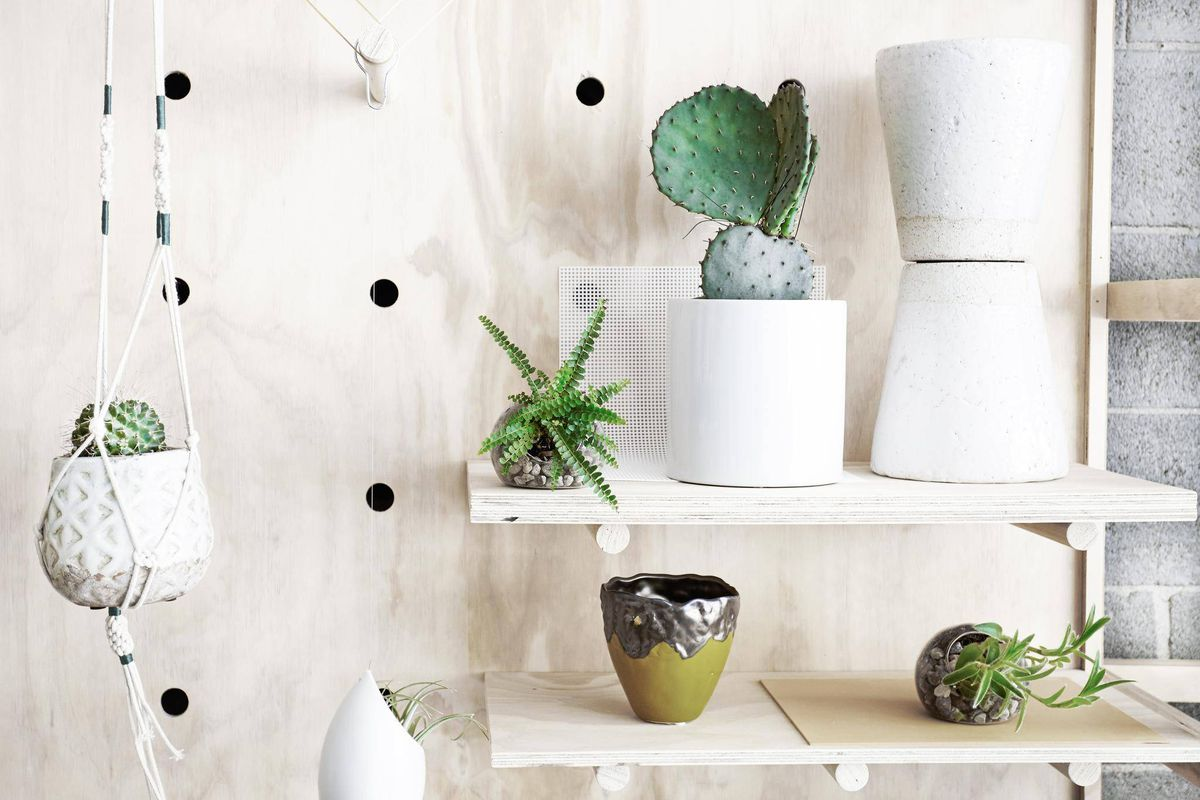 Bring life into your living room by decorating with plants - The ...
