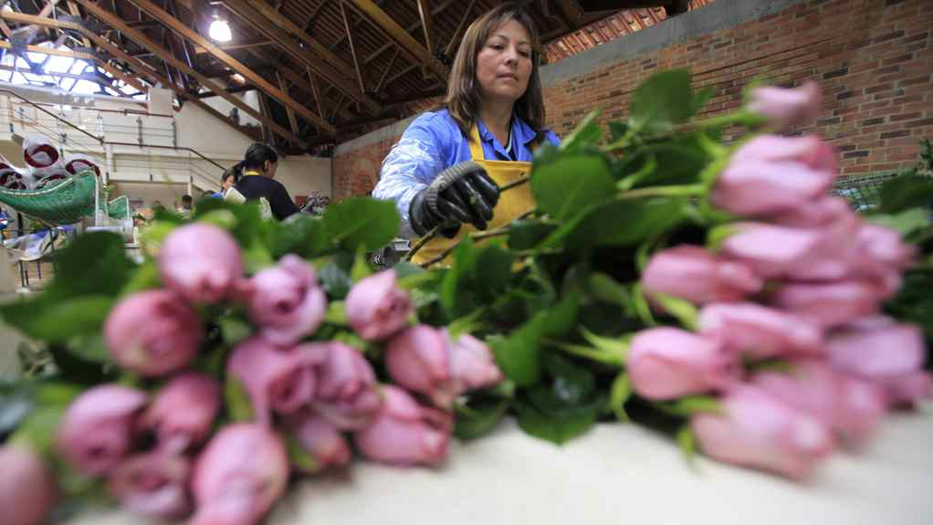 A worker packs roses to be shipped ahead of Valentine's Day.