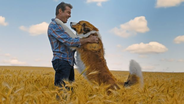 A Dog`s Journey movie review: Emotionally engaging but cliched