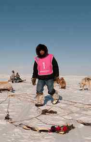 DOCUMENTARY Nunavut Quest APTN, 7:30 p.m.ET; 6.30 p.m. PT Welcome to the real Great White North. Debuting tonight, this documentary series chronicles the annual dog-sledding marathon that takes place each spring across Baffin Island. The format focuses sharply on the 17 sled teams comprised of Inuit natives hailing from such remote locales as Iqaluit, Repulse Bay and Clyde River. Tonight's opener details the myriad preparations leading up to the big race – some teams have an 11-day trek just to make it to the starting line – with the Arctic landscape providing a serenely beautiful backdrop.