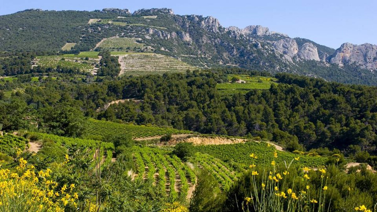 The vineyards on the foothills outside Beaumes de Venise produce a famous dessert wine.