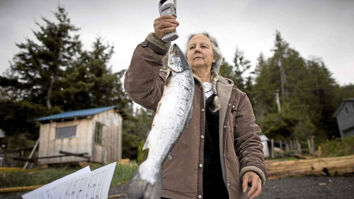 Morton is determined to understand the impact of salmon farmed in open-net pens on wild salmon. She weighs and measures farmed salmon as part of her research.