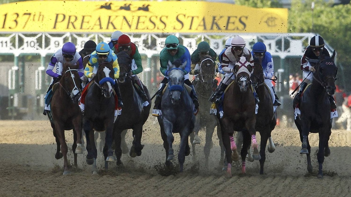 Horses break from the start in the running of the 137th Preakness Stakes at Pimlico Race Course in Baltimore, Maryland, May 19, 2012. REUTERS/Gary Cameron