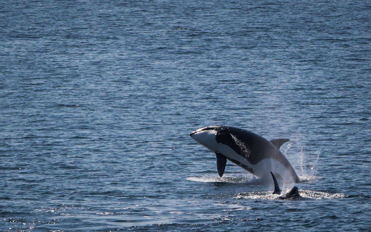 experts gather in vancouver to brainstorm on killer whale recovery