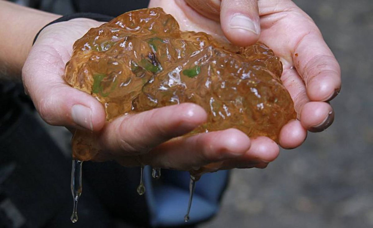 Blakeley Adkins holds a lays clump of northwestern salamander eggs.