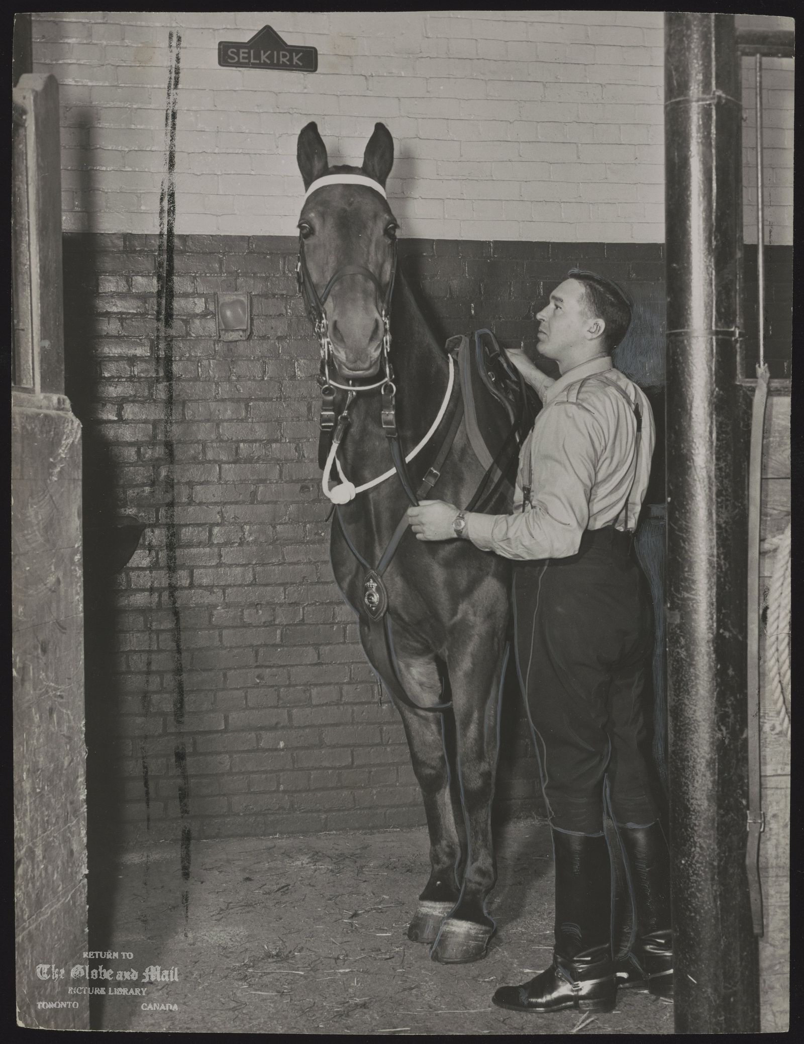 The notes transcribed from the back of this photograph are as follows: Constable Moody puts the bridle on his mount before going out on patrol. Mounted officers perform duties that no car or motorcycle could handle.