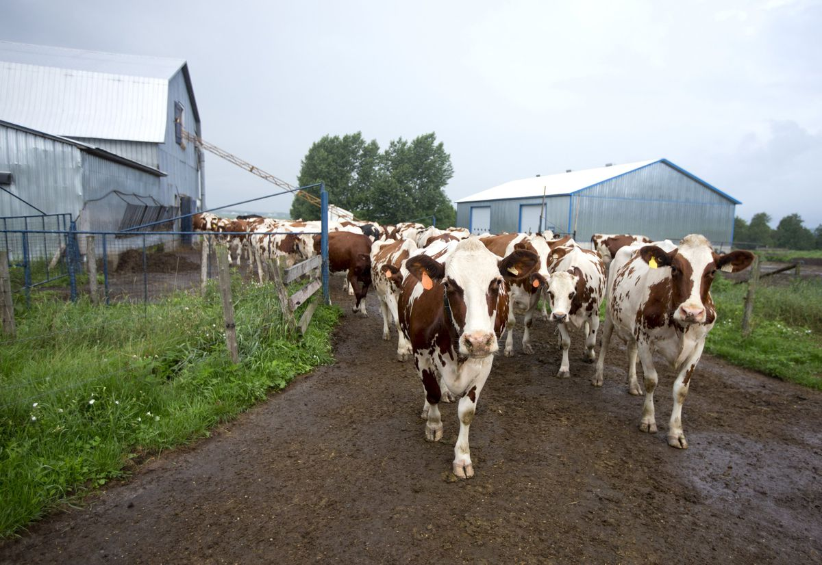 Don't let supply management myths spoil the milk