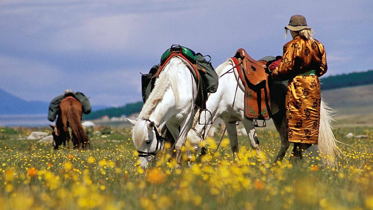 We came to Mongolia to ride horses. They were small, scruffy and tough as nails.