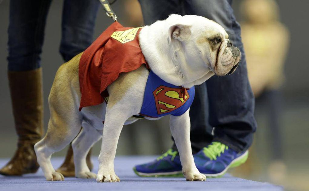 In photos: The best of the Beautiful Bulldog Contest