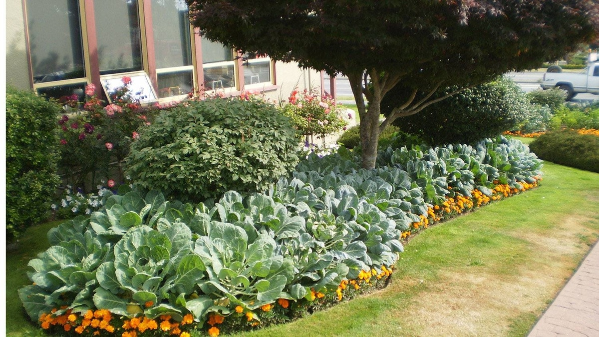 A garden plot outside the town office in Ladysmith on Vancouver Island. In 2009, town employees turned flower beds into vegetable gardens and donate all crops to the food bank.
