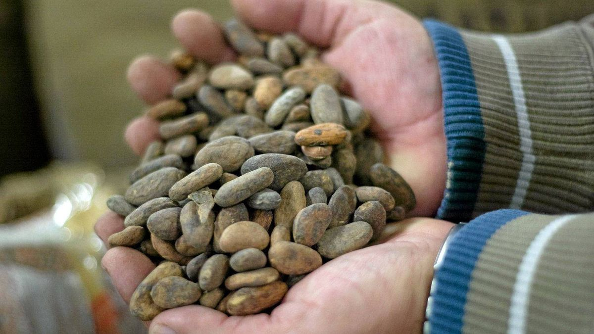 Luis Rivas of Habitual Chocolate holds raw cocoa beans from El Salvador.