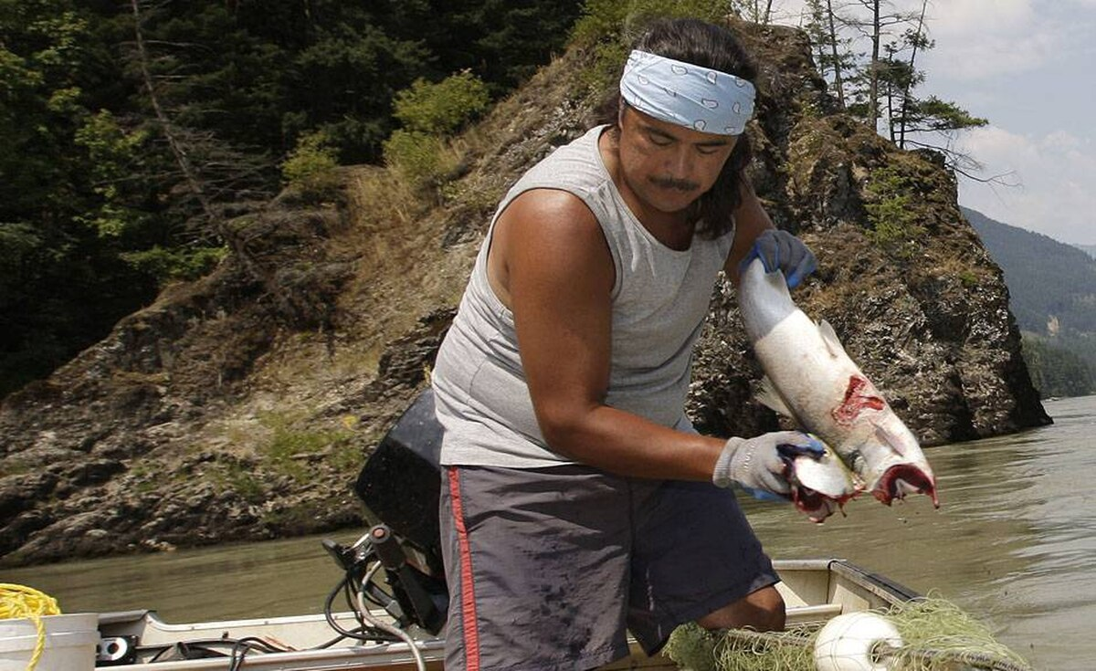 Tyrone McNeil of the Sto;lo Tribal Council breaks the head off and bleeds a sockeye salmon that will later be cut into strips to be hung on a dry rack to cure for up to ten days on the banks of the Fraser river near Hope, BC.