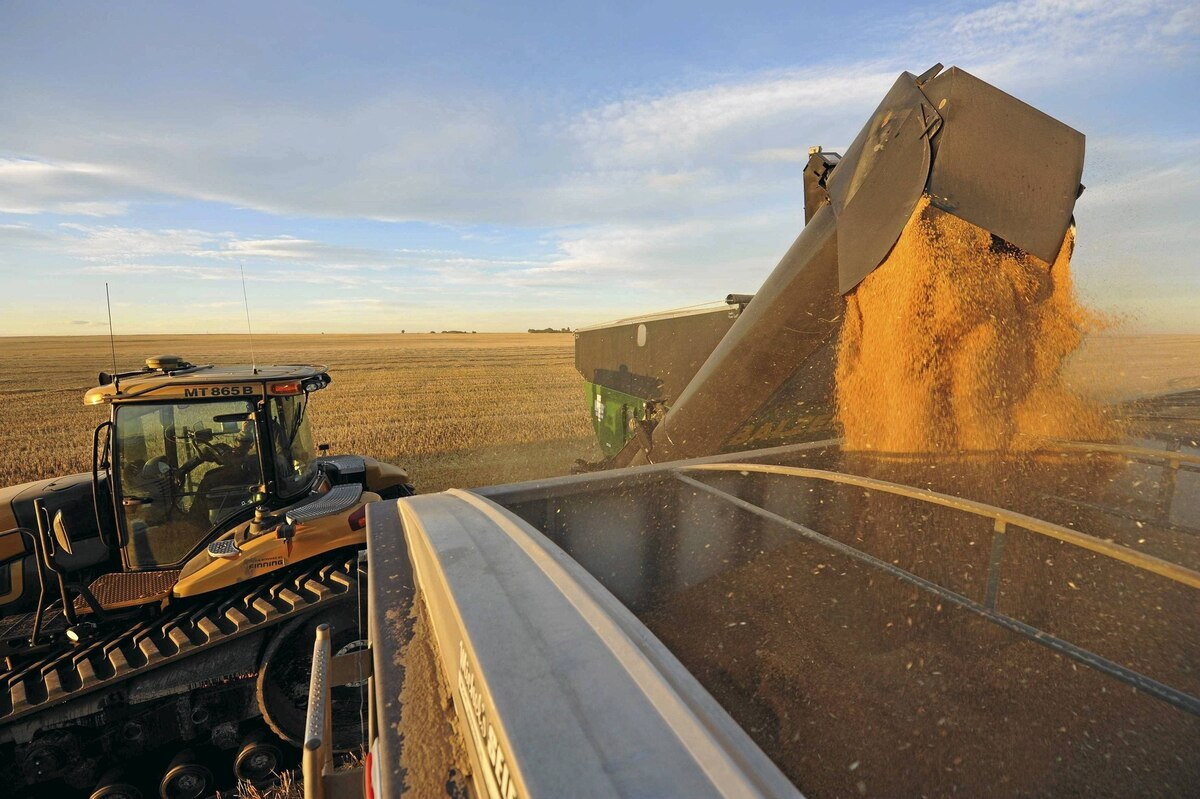 An Alberta wheat farm: The Canadian Wheat Board's role as sole Canadian exporter of wheat and barley to the world is set to end as of Aug. 1. China is the world's largest importer of Canadian malt barley.