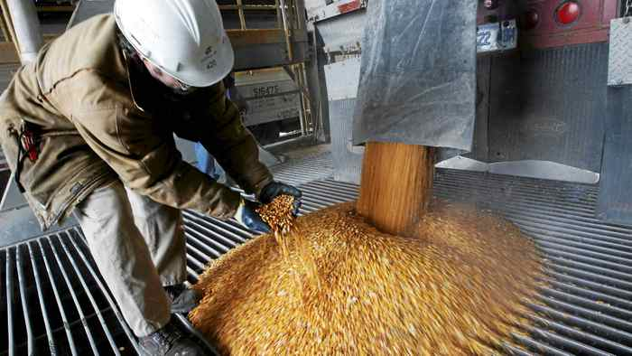 A process operator shows a handful of corn at the GreenField Ethanol plant in Chatham, Ontario April 10, 2008.