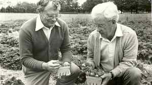 Donald Craig (right) and colleague Lou Ricketson inspect strawberry cultivars in 1983.
