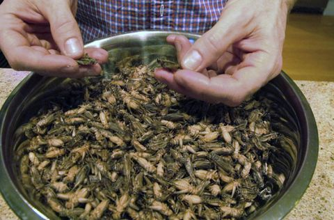 Why eating insects won't end world hunger
