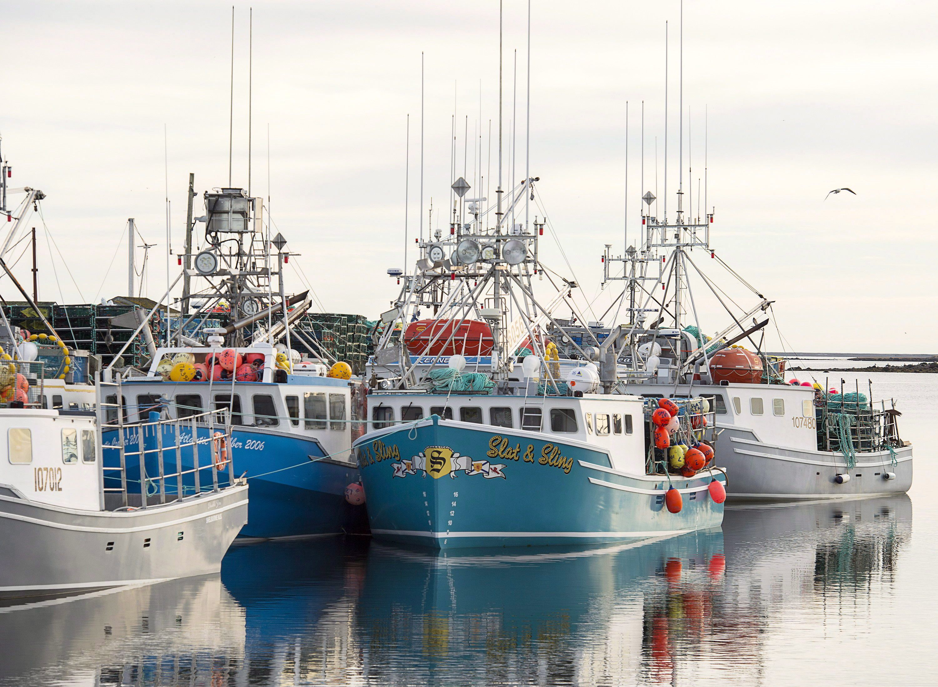 Conservation group says proposed amendments to Fisheries Act give hope for rebound of some species