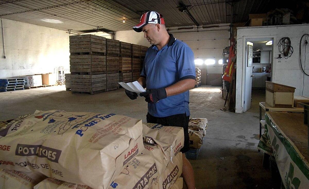 Rob Litwiller checks his shipment list at Thompson Potato Farm in Mount Albert, Ontario.