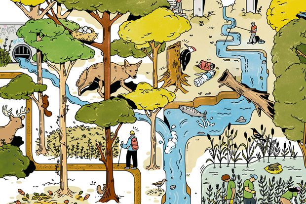 Illustration of imaginary Toronto ravine