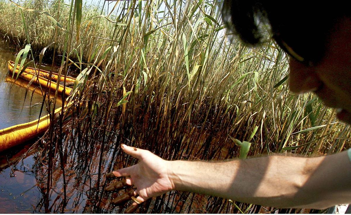 Garret Graves with the Coastal Protection and Restoration Authority shows his hand after collecting oil samples in Pass A Loutre near Venice, Louisiana on May 26, 2010.