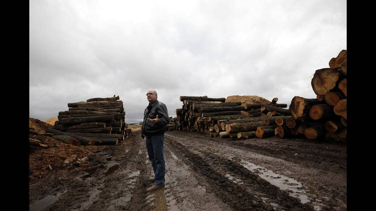 Dennis McGlynn of South Bruce Flooring walks among the logs outside his hardwood flooring plant in Mildmay, Ont.