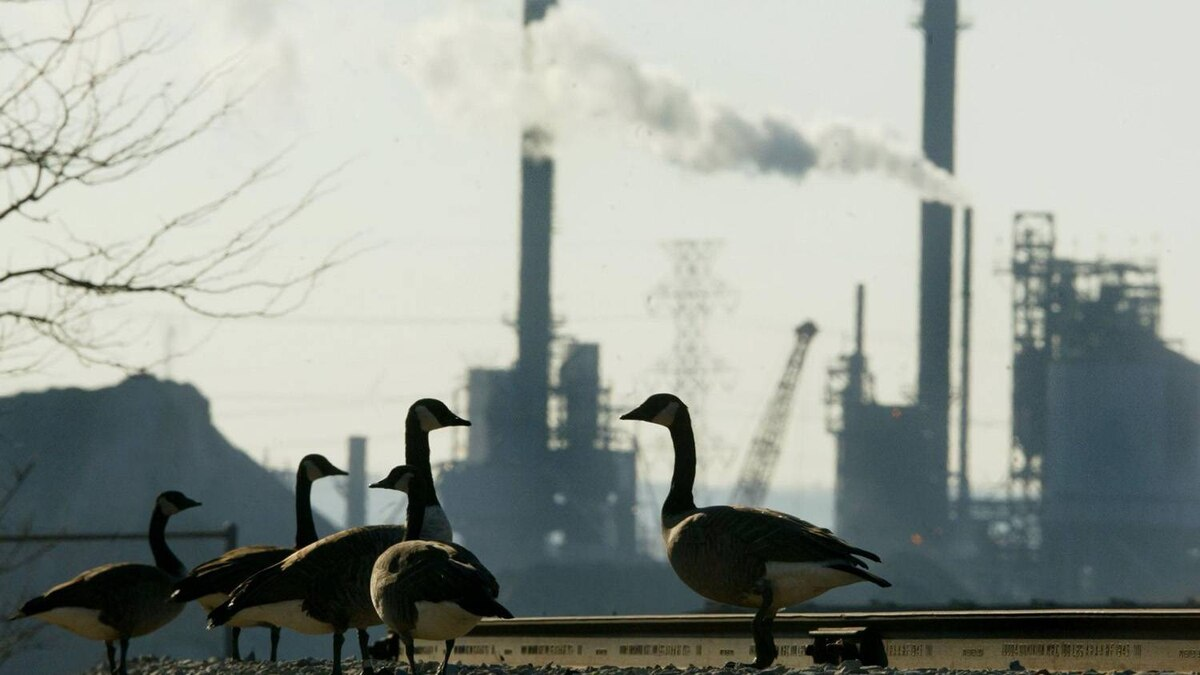 A group of Canada geese stand on railway tracks as a plant operates in the background at Hamilton Harbour in Hamilton, Ont.