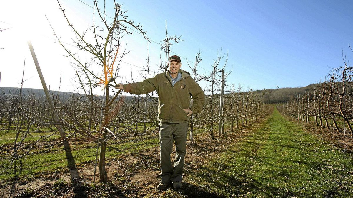 Apple grower John Eisses, president of Fruit Growers Association of Nova Scotia, in his orchard near Centreville, Nova Scotia on April 19 , 2012. He employs mainly Newfoundlanders to help pick his apples.