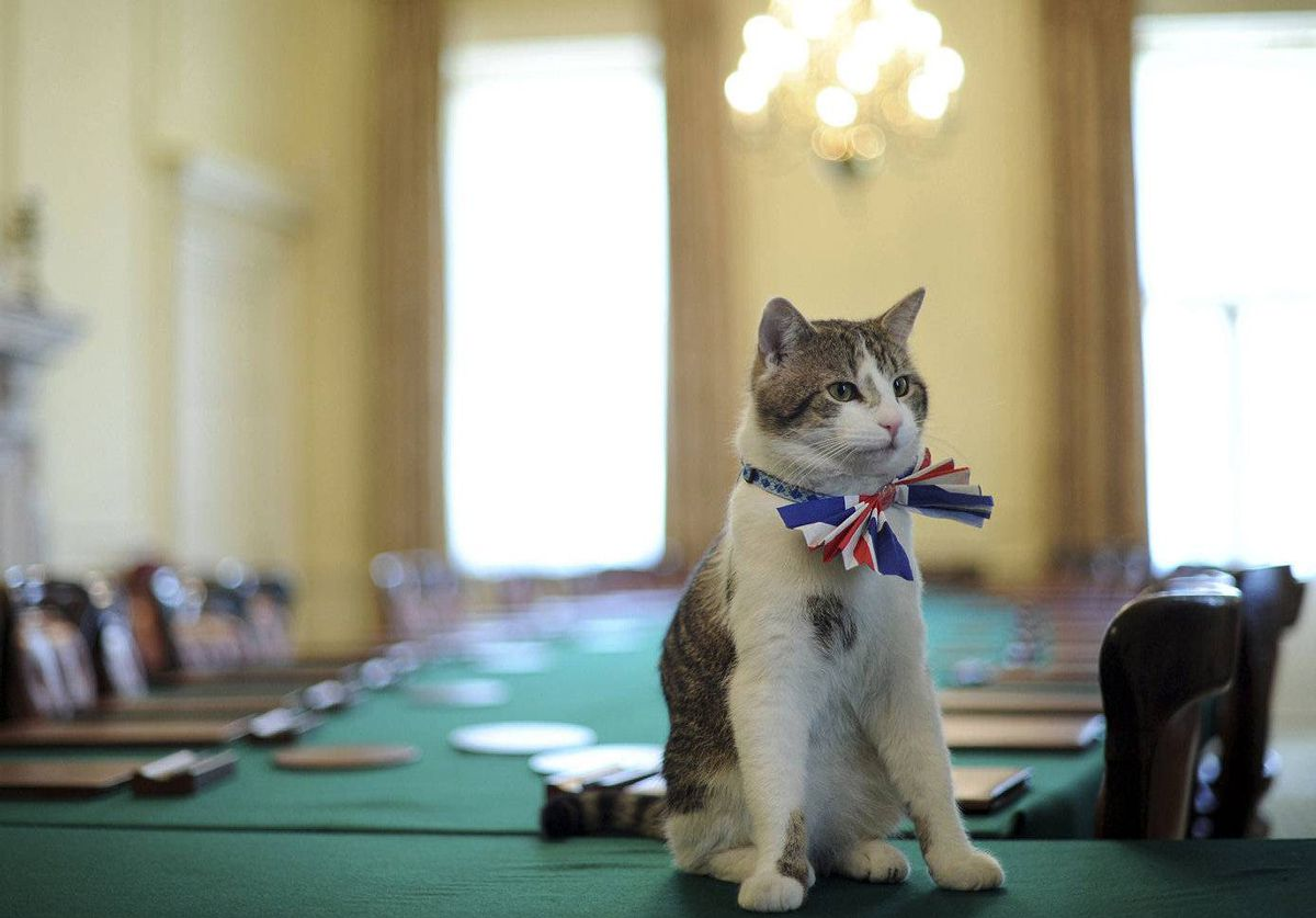 10 Downing Street's resident cat, Larry, wears a Union Jack bow tie as he's photographed in the Cabinet Room in 10 Downing Street, London. Downing Street will host a street party tomorrow to celebrate the royal wedding of Britain's Prince William to Kate Middleton.