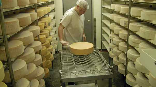A cheese maker at Laiterie Charlevoix brushes the rinds of ripening wheels of Hercule de Charlevoix.