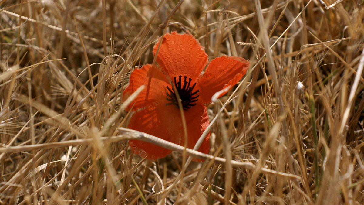 Matthew J. Baird photo: Gallipoli - This picture was taken in the fields of Gallipoli in Turkey where 130,000 soldiers lost their life, including 49 from Newfoundland.