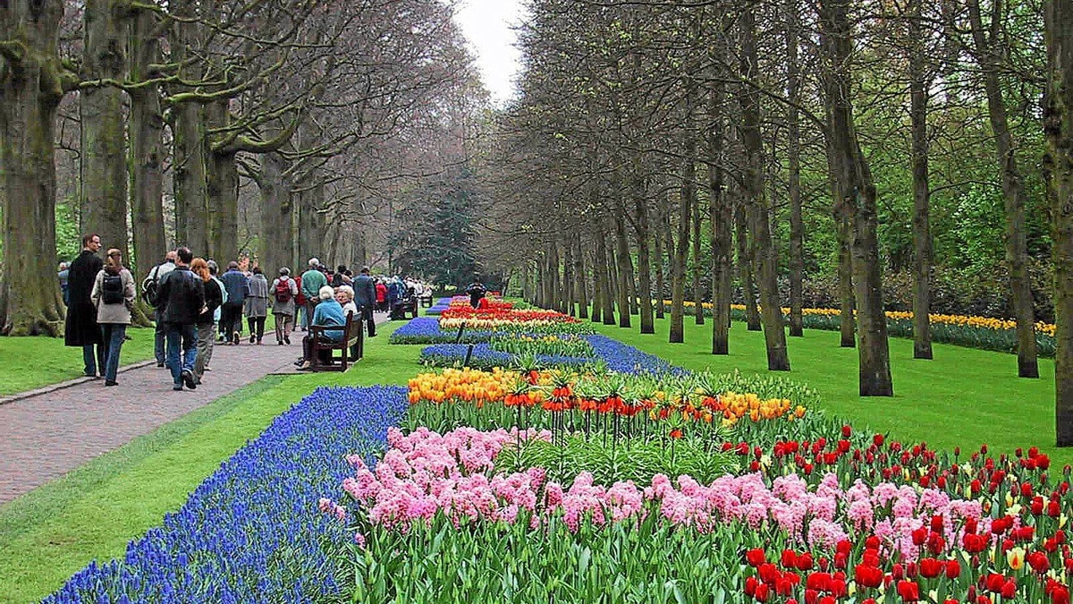 Walk among the floriculture at Keukenhof garden in Lisse where more than seven million tulip bulbs bloom each year.