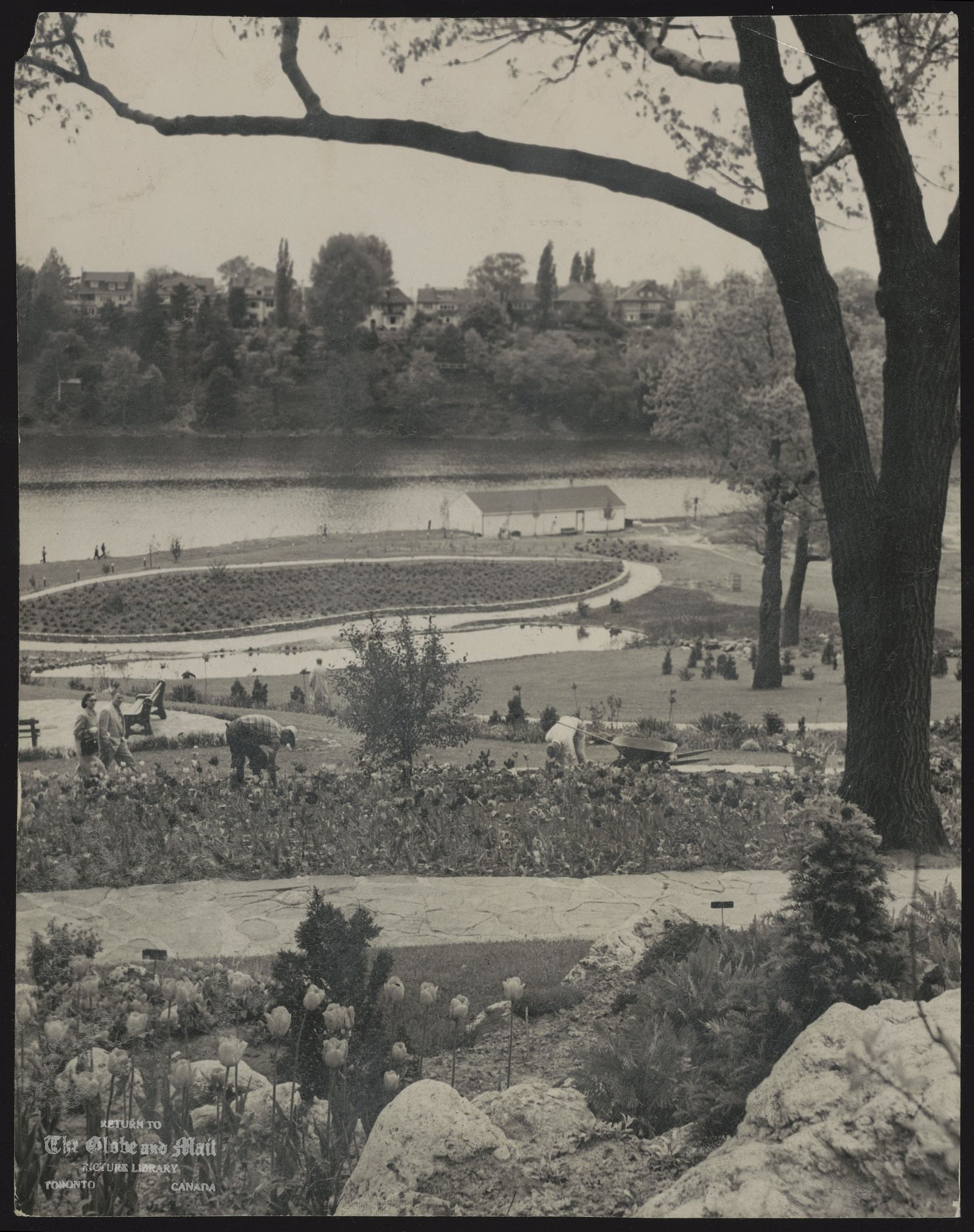 HIGH PARK (Toronto) [Parks Commissioner George Bell's men have landscaped the slopes down to Grenadier Park with lawns]