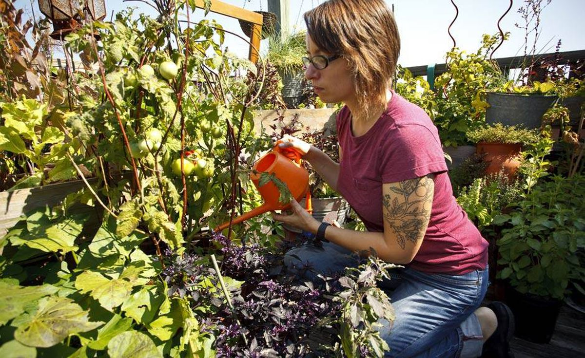 Gayla Trail, The Globe and Mail's Real Dirt columnist, is a longtime canning enthusiast. Among her favourite foods to preserve are the tomatoes she grows on her balcony garden in Toronto.