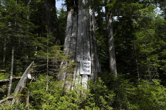 Squamish Nation calls on B.C. to halt old-growth logging in traditional territories