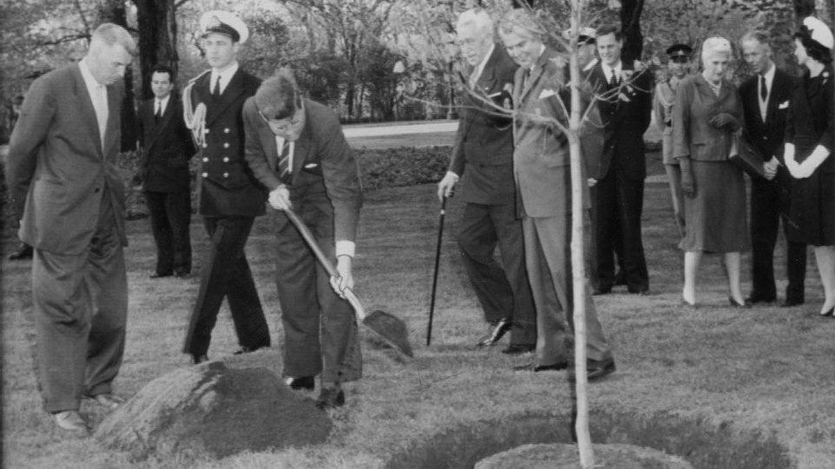 President Kennedy tosses earth around the base of a tree planted on the grounds of Government House in 1961. Looking on from behind the sapling are Governor-General Georges Vanier and Prime Minister John Diefenbaker. The White House later reported that Kennedy injured his back during the planting.