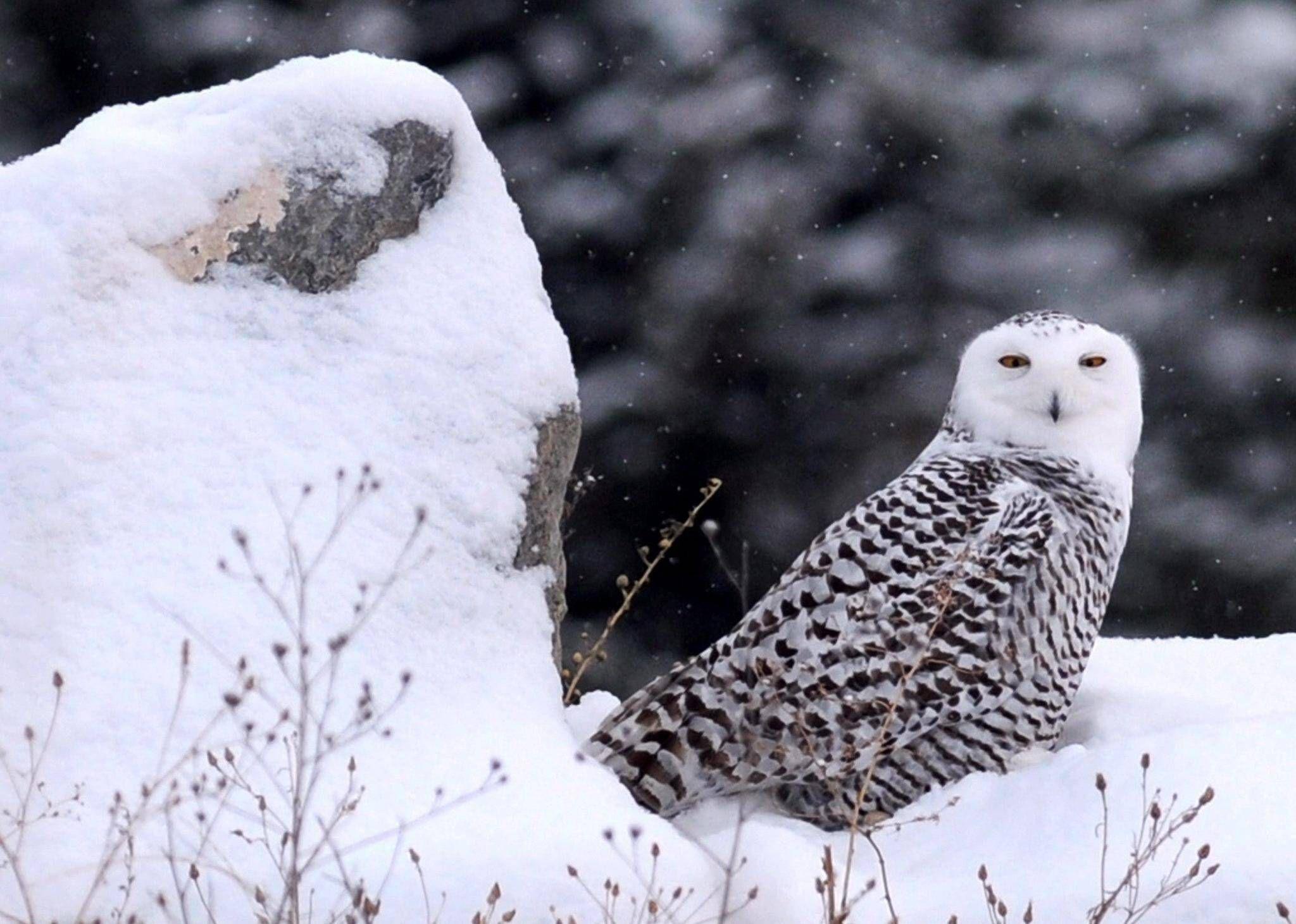 Bird populations in steep decline in North America, study