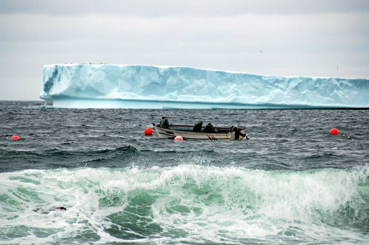 Find a guide and catch your own in waters off the coast of Newfoundland.