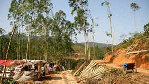 Sino-Forest operations in China.