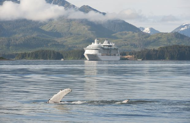 Whale watching tour at Icy Strait Point, Alaska.