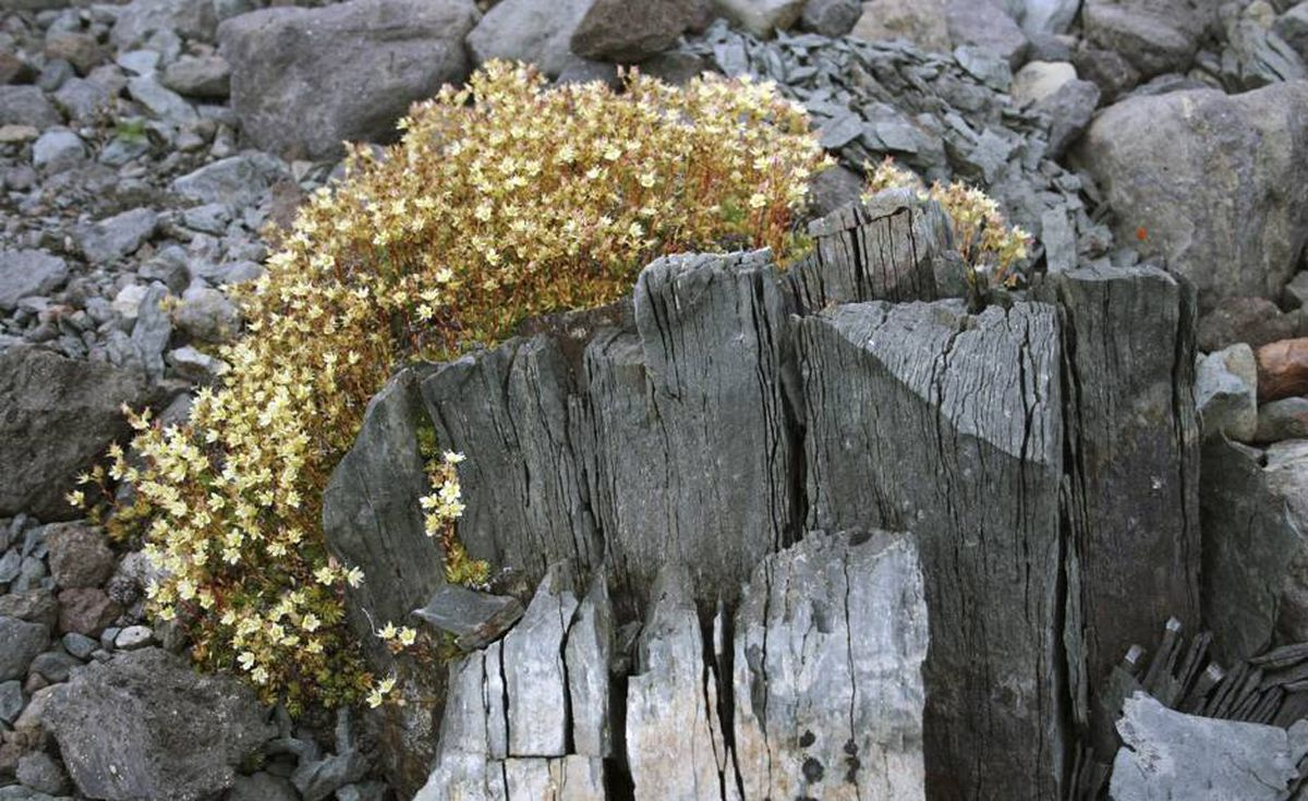 Rugged vegetation survives in the volcanic landscape.