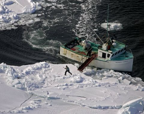 East Coast seal hunt starts amid ongoing court case, trade challenge